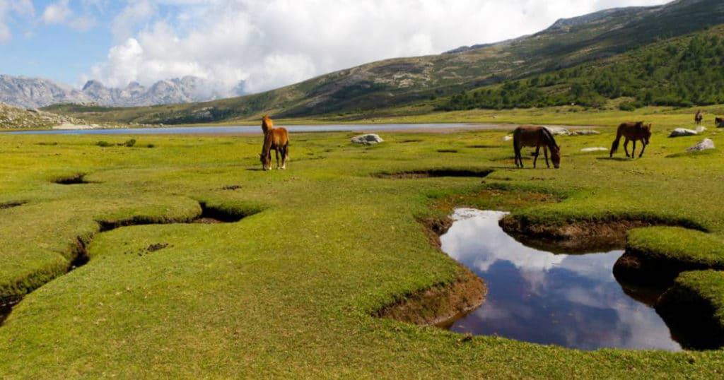 chevaux dans les pozzines