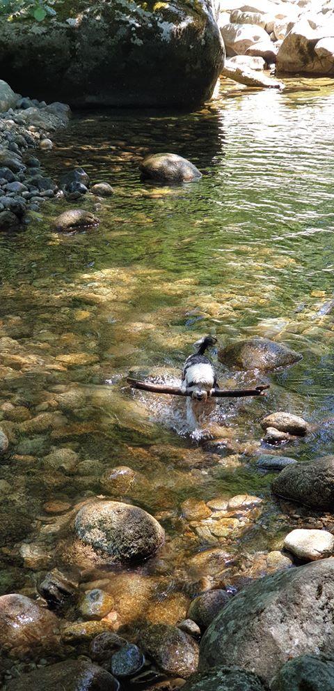 oiseau d eau